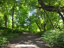 Sentier (été)
